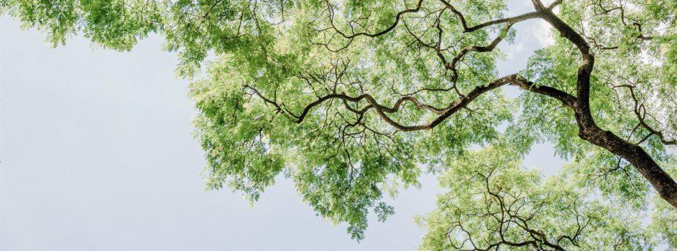 branch-bright-color-1313807 1